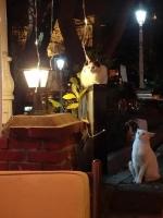 イスタンブルの猫