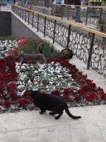 イスタンブルの猫3