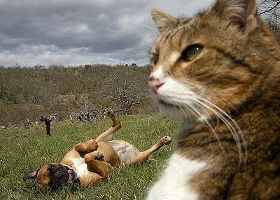 cats_and_dogs_photobombing_03.jpg