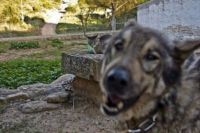 cats_and_dogs_photobombing_06.jpg