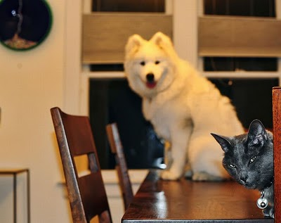 cats_and_dogs_photobombing_13.jpg