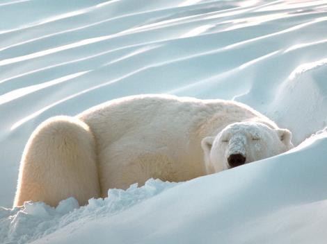 Sleeping_Beauty-767766_convert_20120111223229.jpg