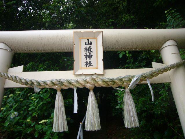 山祇神社鳥居(桜木)
