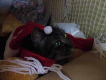 18-6216 フサ2011クリスマス ワッフルベッドで上目