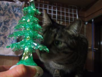 18-6216 レオ2011クリスマス ツリーに鼻よせ良いお顔 幅350