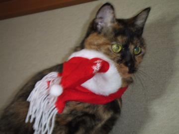 茶コリ2011クリスマス なんとか着せられたけど下に来ちゃった13-4173 幅350