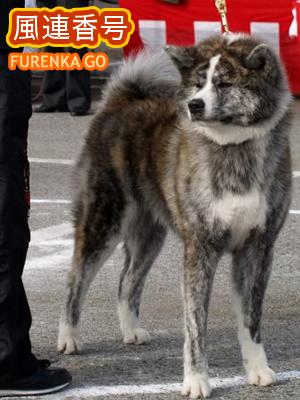 furenka01.jpg