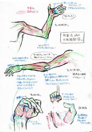 解剖 腕 ps