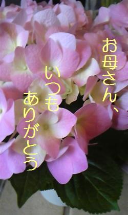 DVC00154_20100509024447.jpg