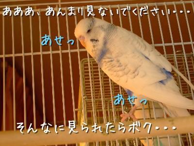 3_20131205175608dc3.jpg
