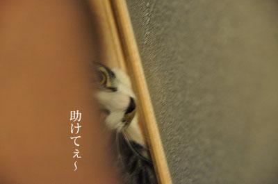 DSC_0084-1.jpg