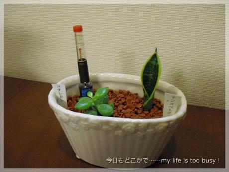 131111-3植栽