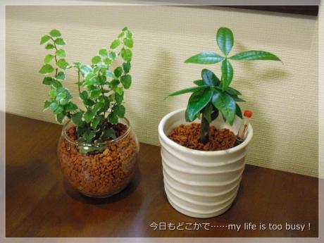 131111-4植栽