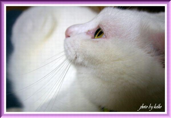 白猫 Love♪