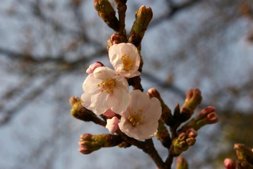 宝塚 花の道