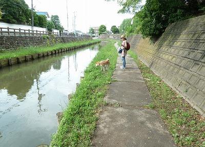 新河岸川遊歩道