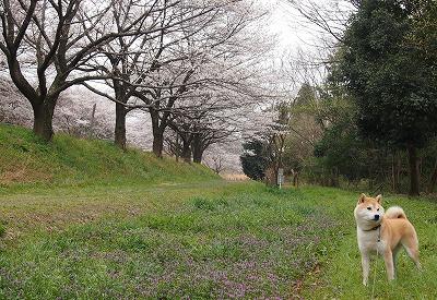 桜とあきの♪