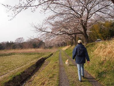 桜散策♪♪