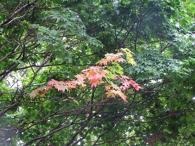 奥入瀬渓谷の紅葉