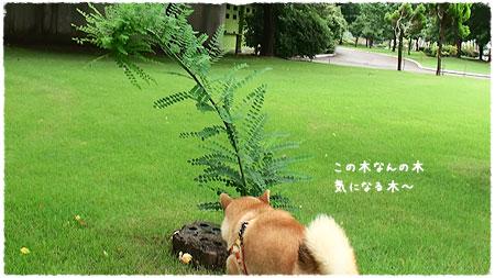 この木何?