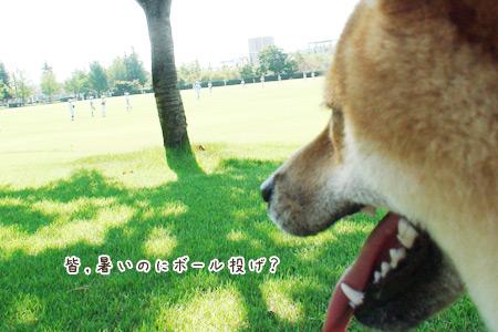 野球かぁ~