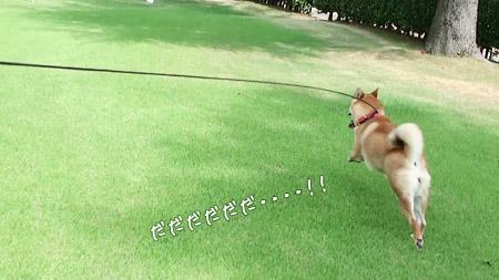 走ります!