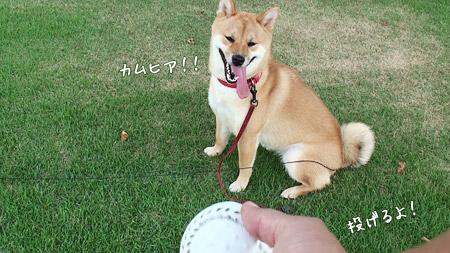 ボール投げするよ