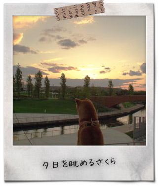 夕日シリーズ1