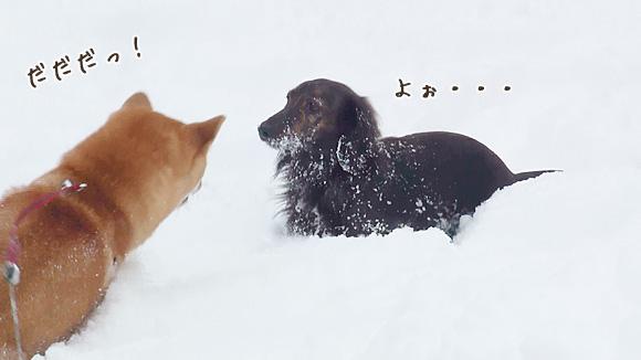 犬の・・・