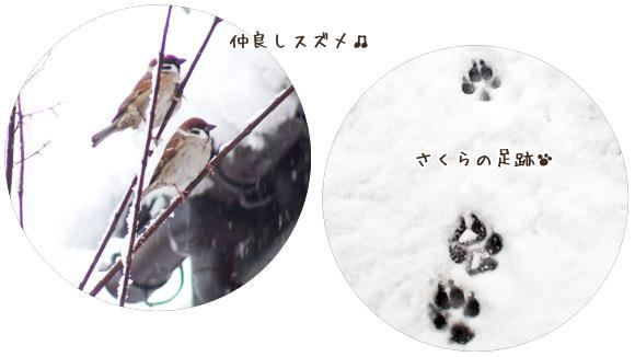 雀と犬の足跡