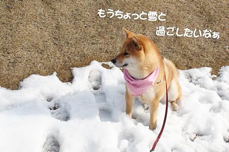 雪がもう恋しい?