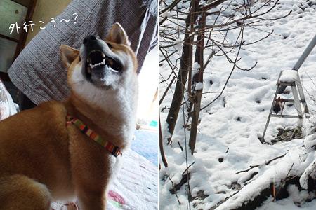 雪つもってるの