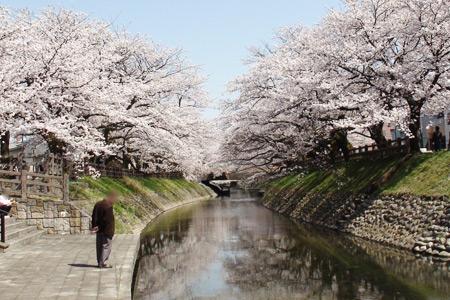 川に写る桜
