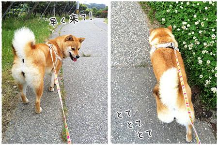 山道散歩♪