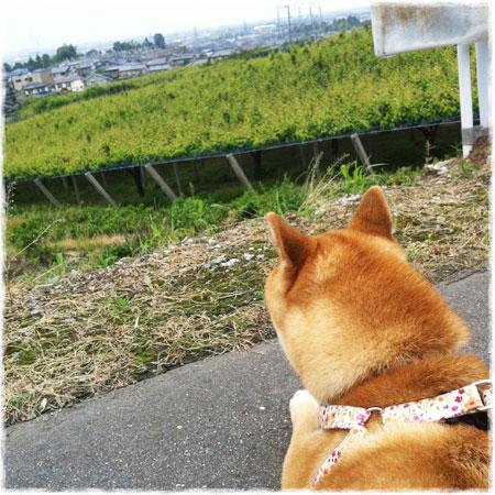 いい景色☆