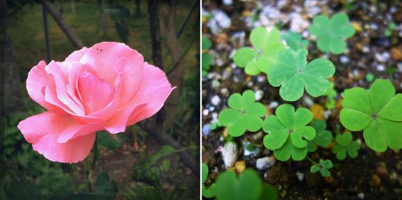 庭の花達1