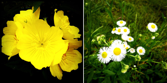 庭の花達3