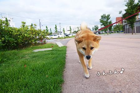 散歩きた☆