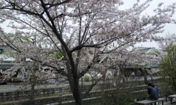 倉敷 美観地区5
