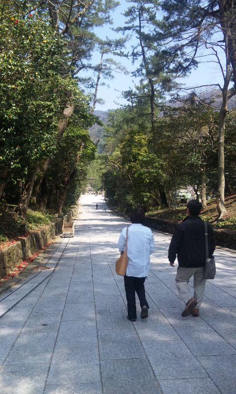 出雲大社の松の道