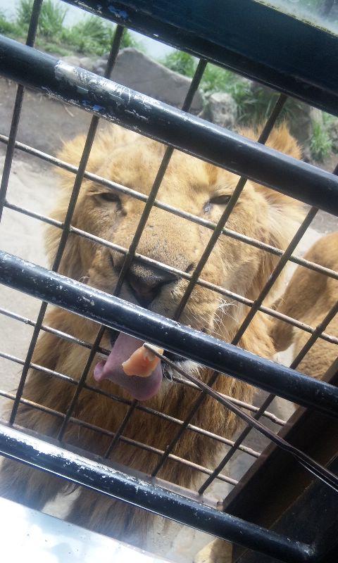 ライオンご飯