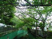 imagawa (3)