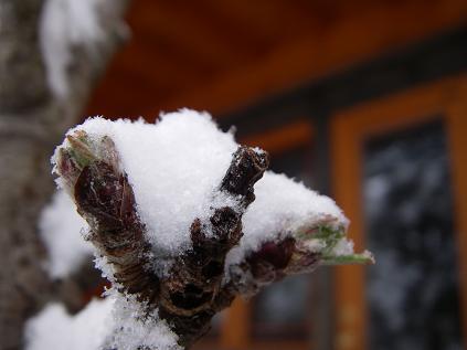 4月17日 雪