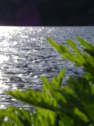 近所の湖(2010年5月15日)