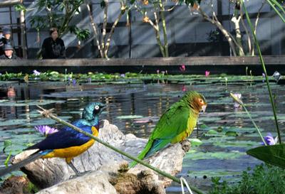青と緑の鳥1_aa