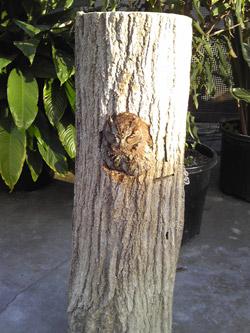 木の幹?_aaa