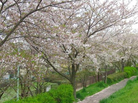 ★01 桜