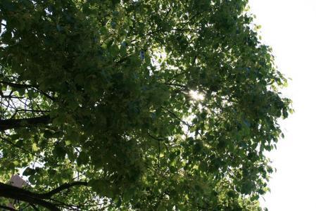 01 木もれび