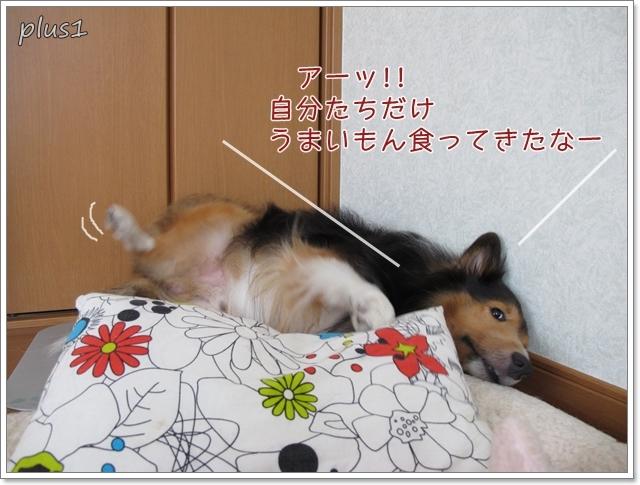 05 すねるシル