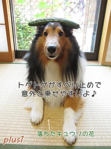 ★きゅうり07